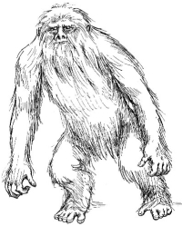sasquatch-sketch.jpg